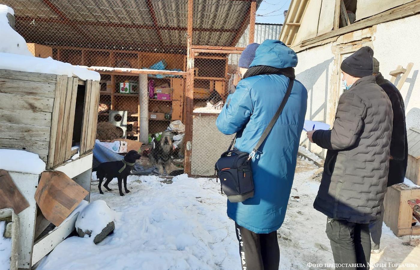 Волонтерская помощь приюту «4 Лапы +» г. Семей